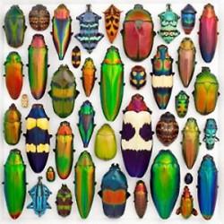 Entomologia - farfalle - coleotteri ecc.